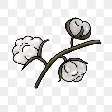 Cotton clipart cotton flower. Png images vector and