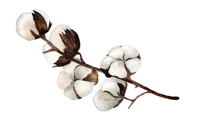 Watercolor clip art print. Cotton clipart cotton flower