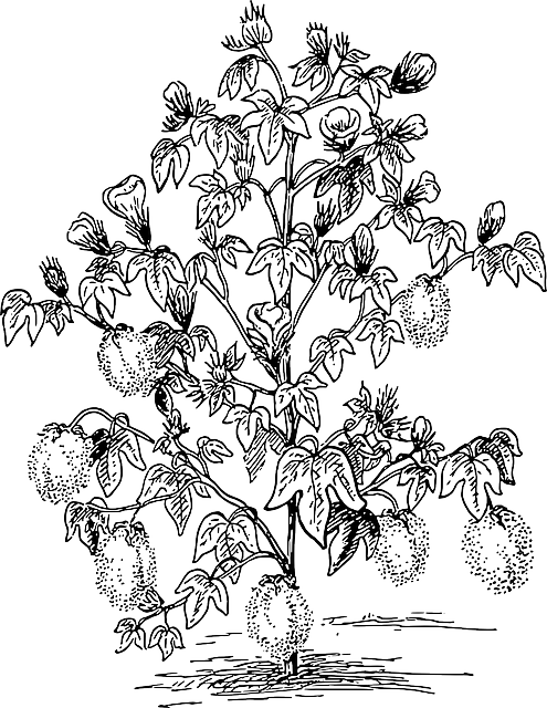 Free image on pixabay. Cotton clipart cotton plantation
