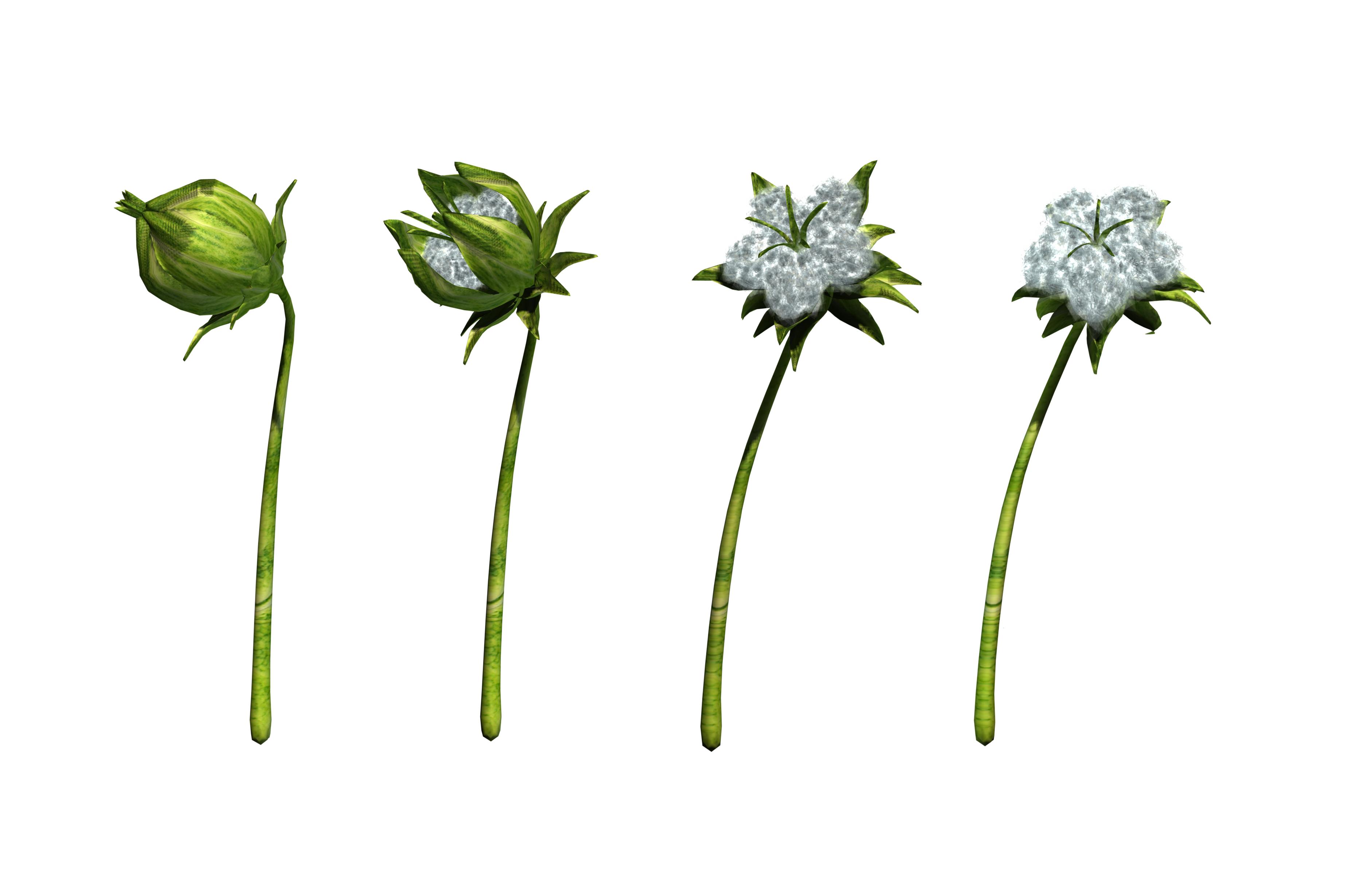 Png transparent images all. Cotton clipart cotton stem