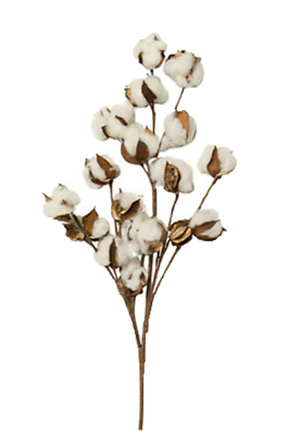Cotton clipart cotton stem. Flowers images gallery for