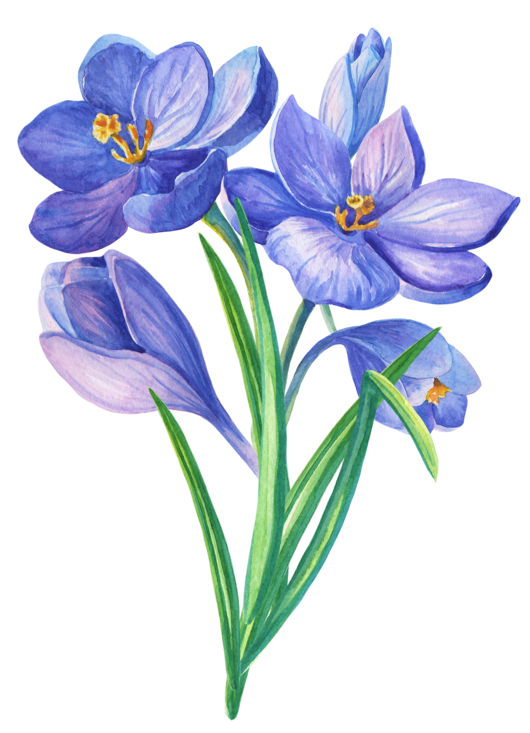 Pin by edlmagdi on. Daffodil clipart trumpet flower