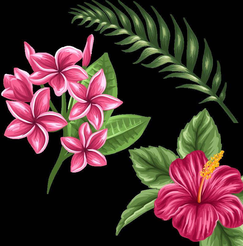 a ca f. Hibiscus clipart plumeria