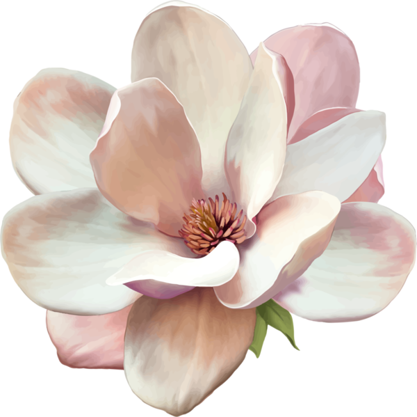 Magnolia flower png. Tattoo signe de respect