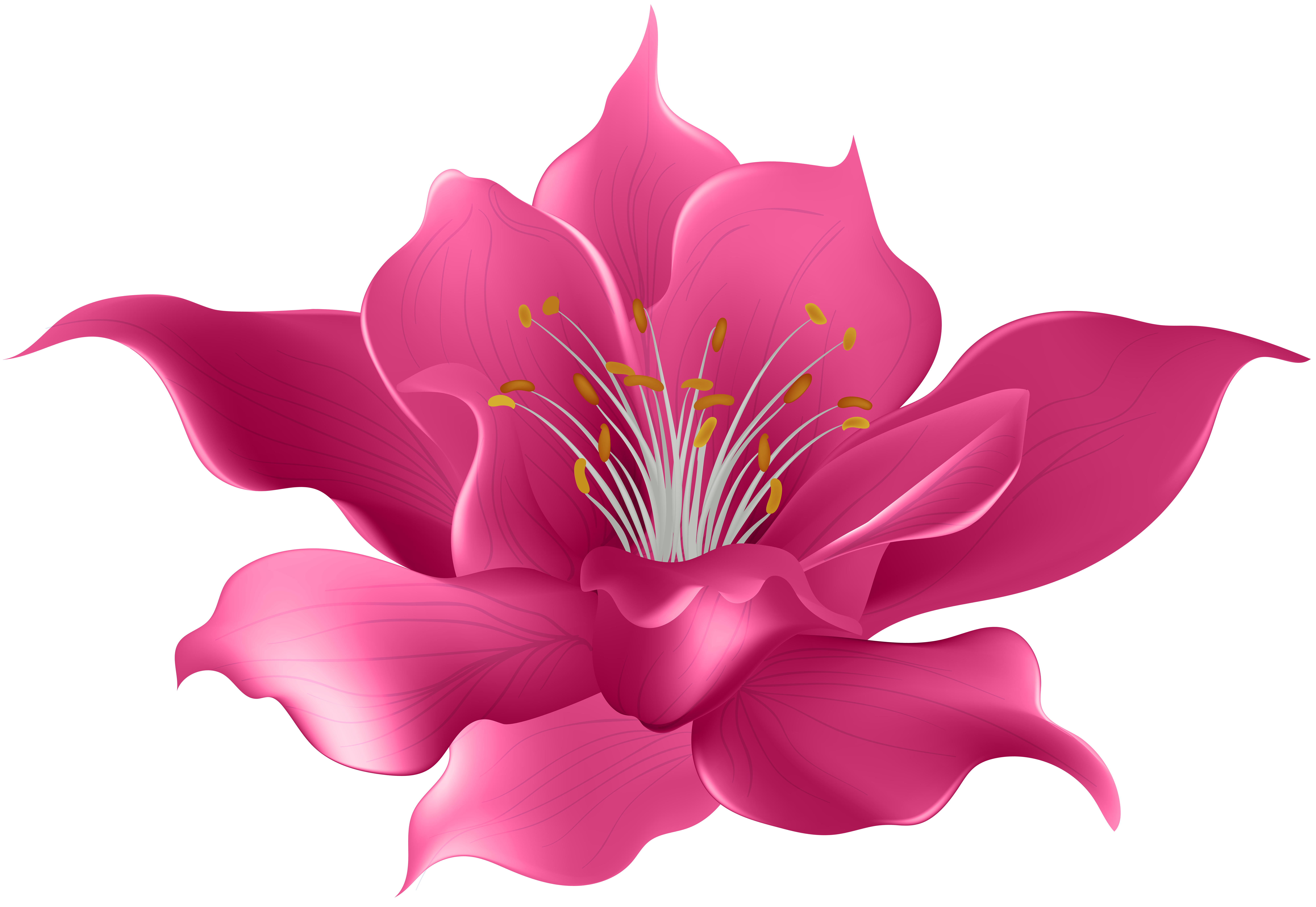 Drawing violet clip art. Magnolia flower png