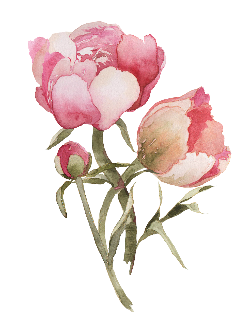 Peony clipart wedding flower. Happy new year finally