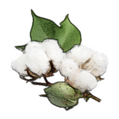 Download free png image. Cotton clipart transparent background