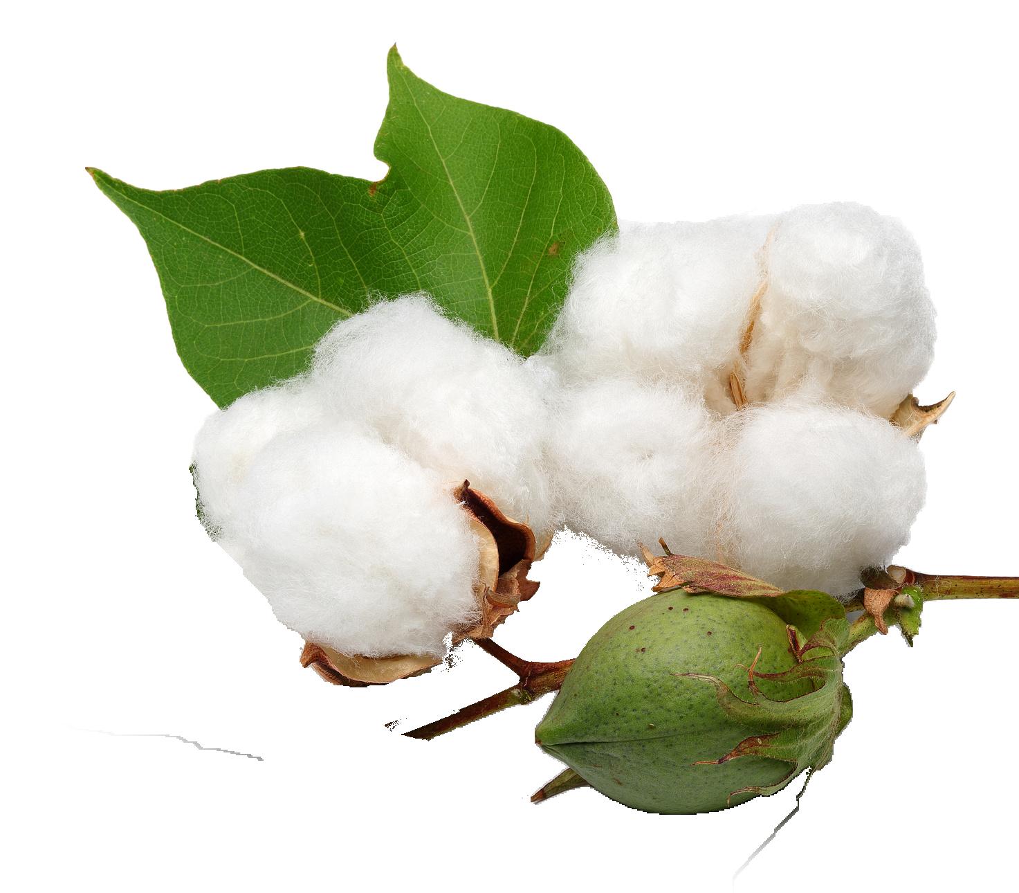 Png names. Cotton clipart transparent background