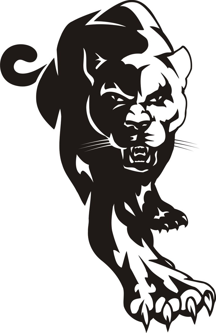 Cougar clipart cool. Free cliparts download clip