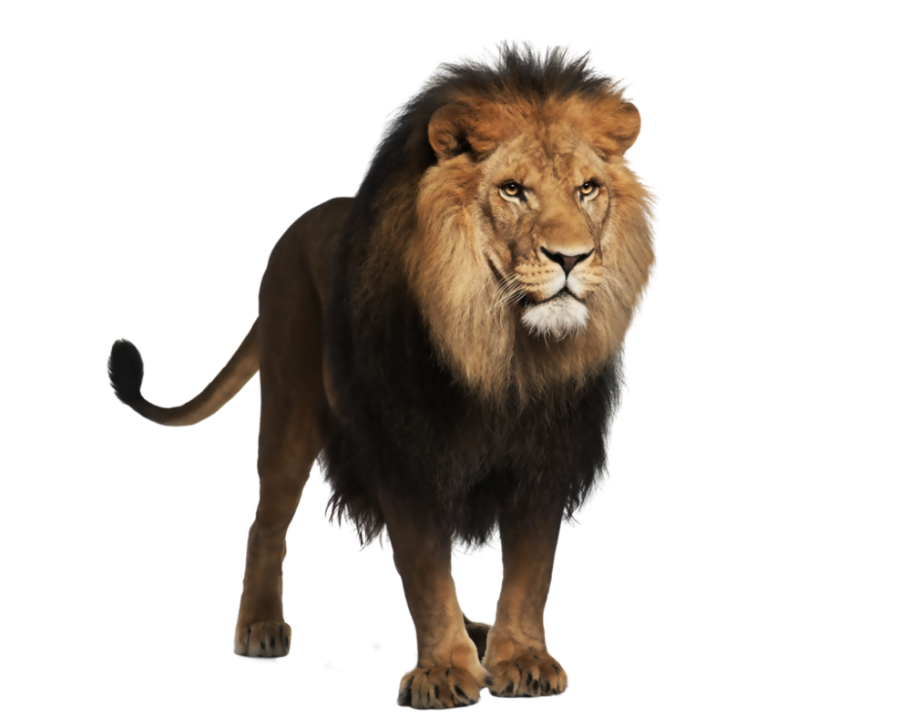 Pre cut by moonglowlilly. Trail clipart lion