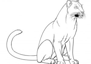 Easy drawing at paintingvalley. Cougar clipart simple