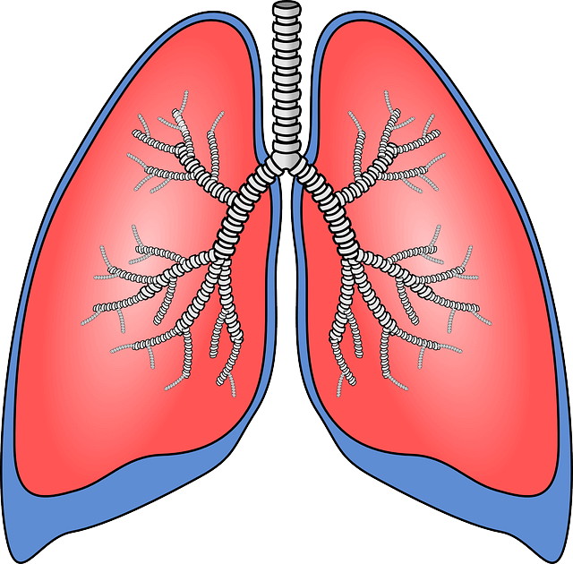 Acupuncture for bee cave. Lungs clipart chronic bronchitis