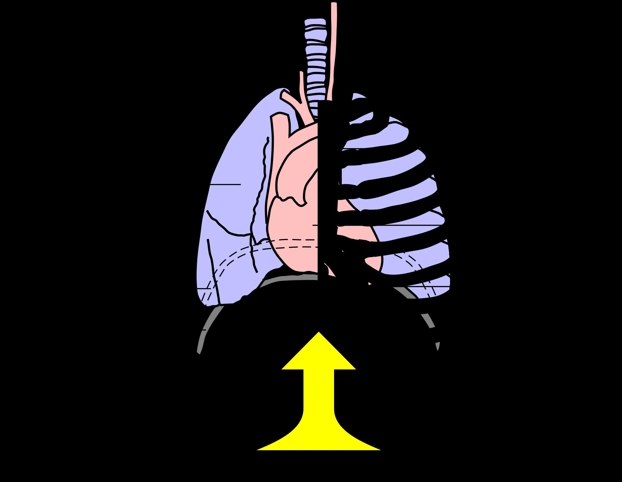 File principe heimlich face. Cough clipart poumons