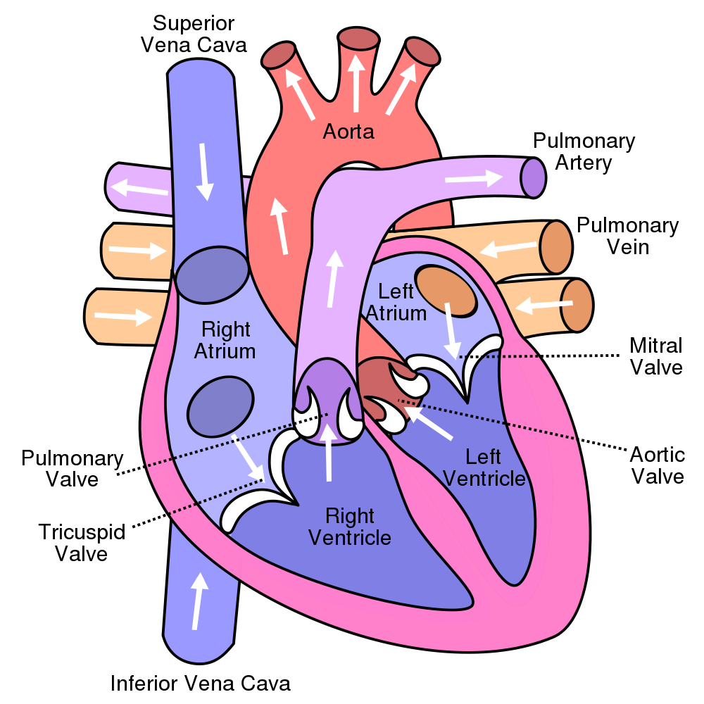 Disease weak heart