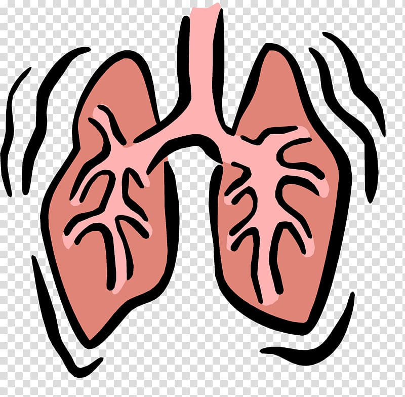 Respiratory system therapist . Lungs clipart respiration