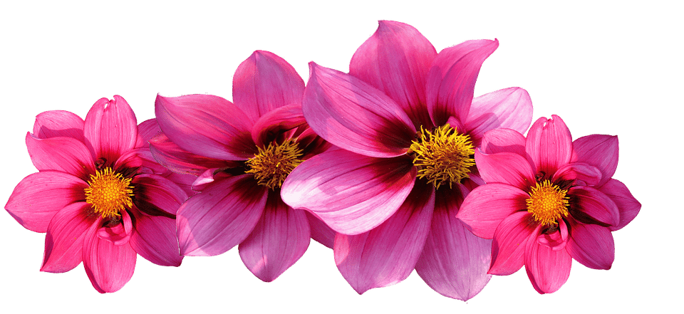 Types of flowers names. Aesthetic flower png