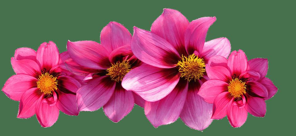 Poppy clipart stemmed flower. Types of flowers names