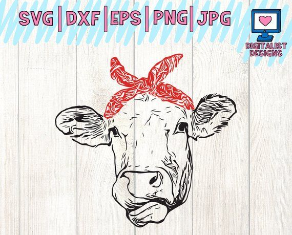 Cow svg heifer face. Cows clipart file