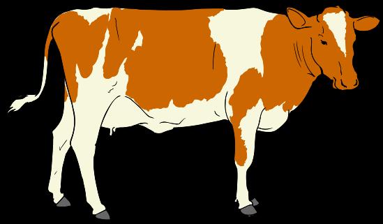 File cow svg wikimedia. Cows clipart livestock