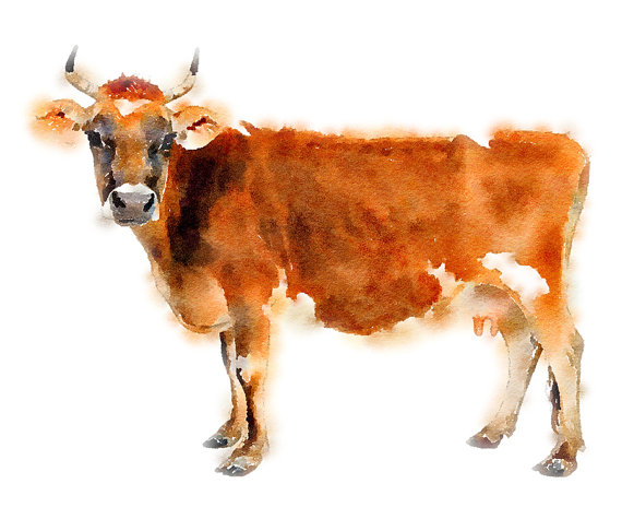 Cow clipart watercolor. Pin by kim hutchens