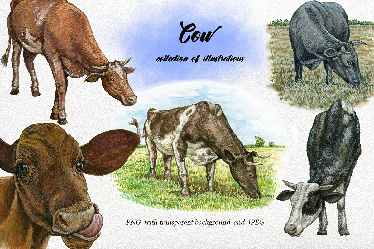 Cow clipart watercolor. Animals