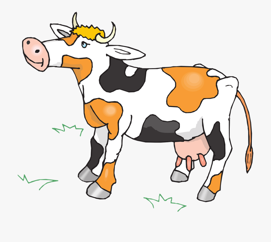 Cow cattle livestock free. Cows clipart farm animal