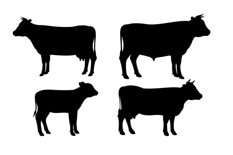 Svg silhouette cut cricut. Cows clipart file
