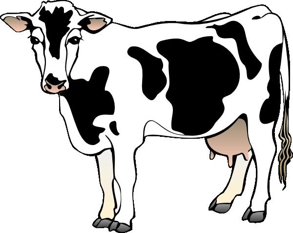 Dairy cow clip art. Cows clipart gambar