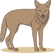 Free clip art pictures. Coyote clipart