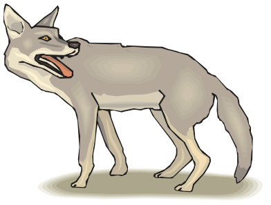 Coyote clipart. Animals c png html