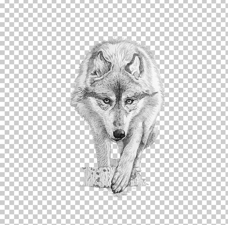 Coyote clipart angry. Gray wolf drawing png