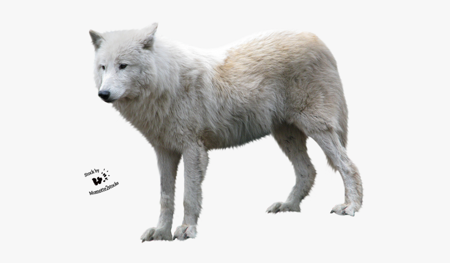 Arctic profile white . Wolf clipart real wolf
