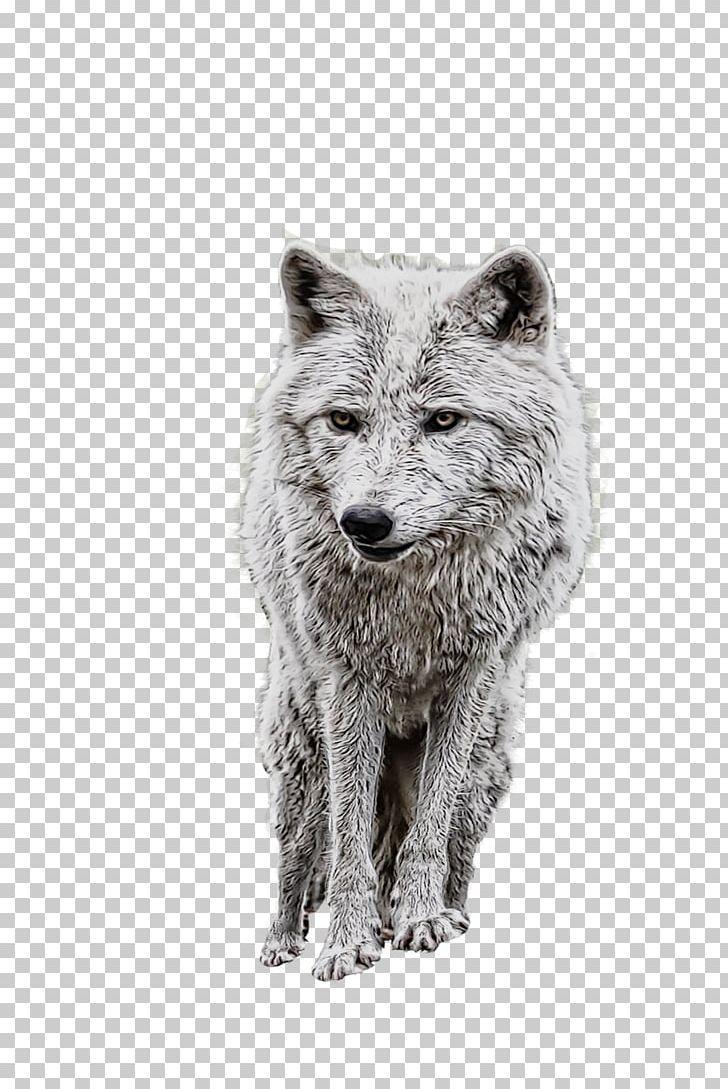 Coyote clipart artic wolf. Alaskan tundra dog arctic