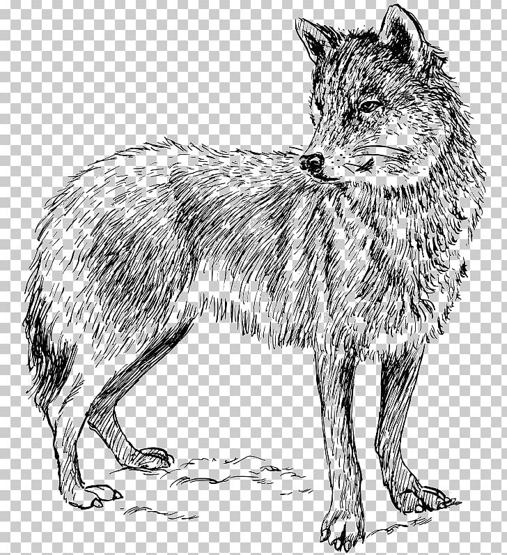 Arctic png angry face. Coyote clipart artic wolf