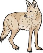 Coyote clipart clip art.  clipartlook
