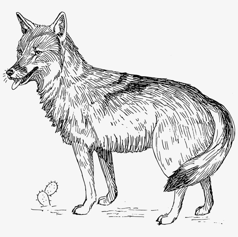 Coyote clipart desert coyote. Fox black and white
