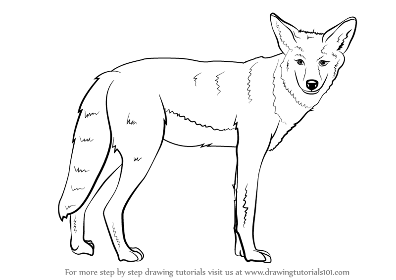 Pin on animal silhouettes. Coyote clipart desert coyote
