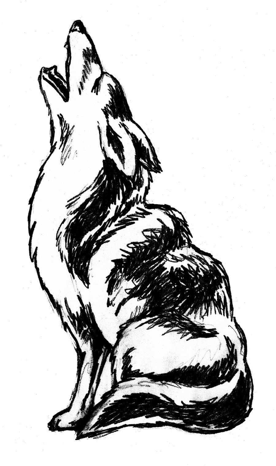 Howling clip art by. Coyote clipart desert coyote