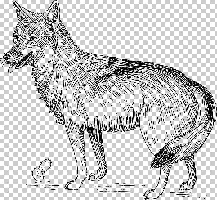 Coyote clipart lobo. Animal ilustraciones gris png