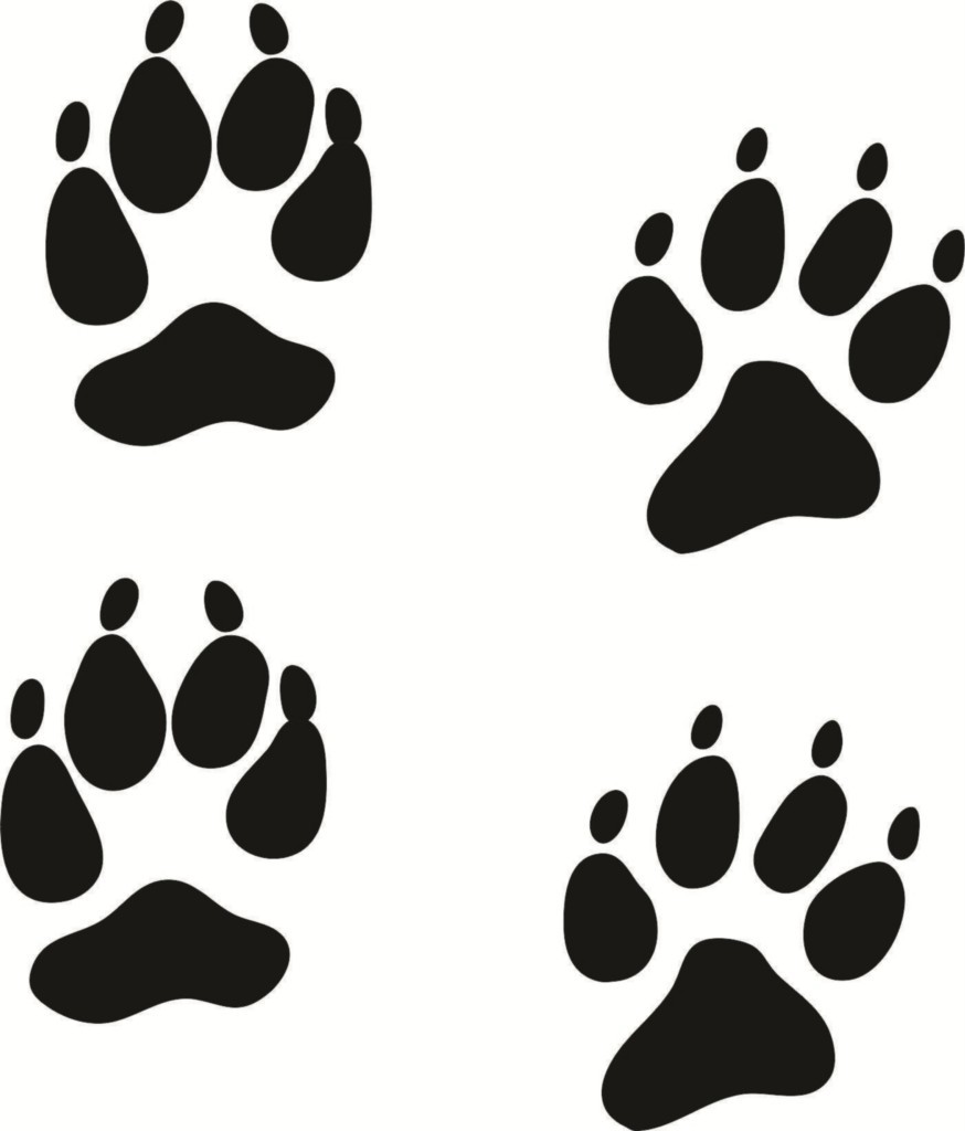 Coyote paw print clip. Pawprint clipart dog tracks