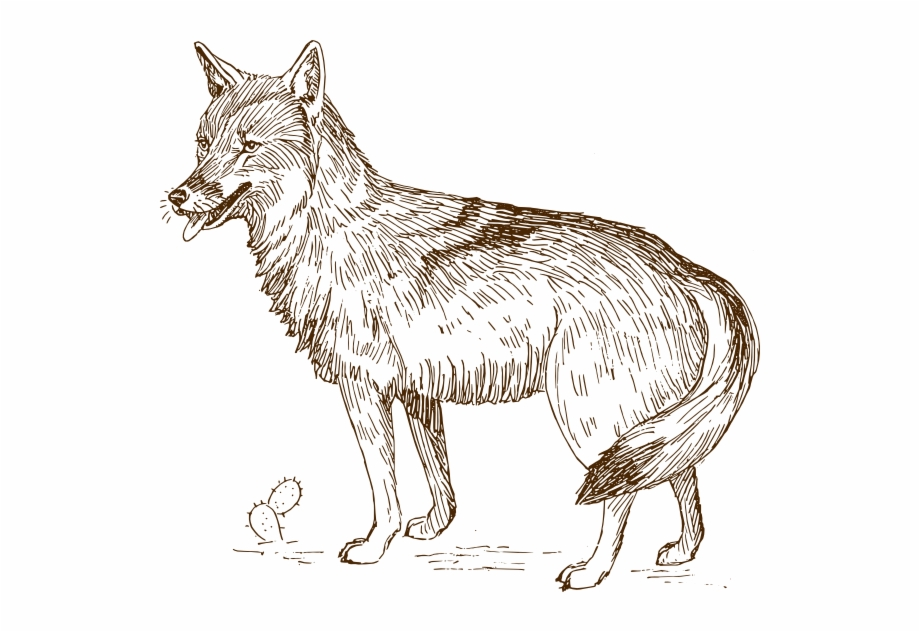 Wolves clipart realistic. Wolf clip art coyote