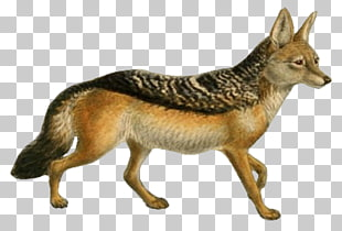 Free download clip art. Coyote clipart swift