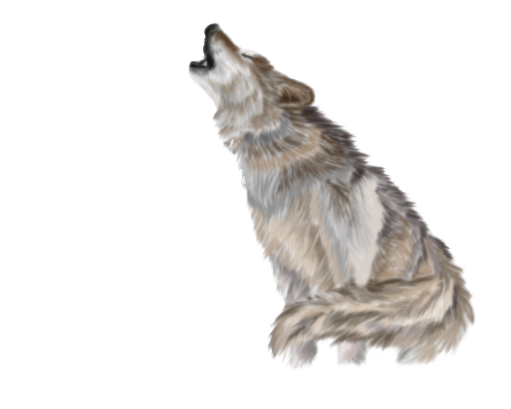 Wolf png file web. Coyote clipart transparent
