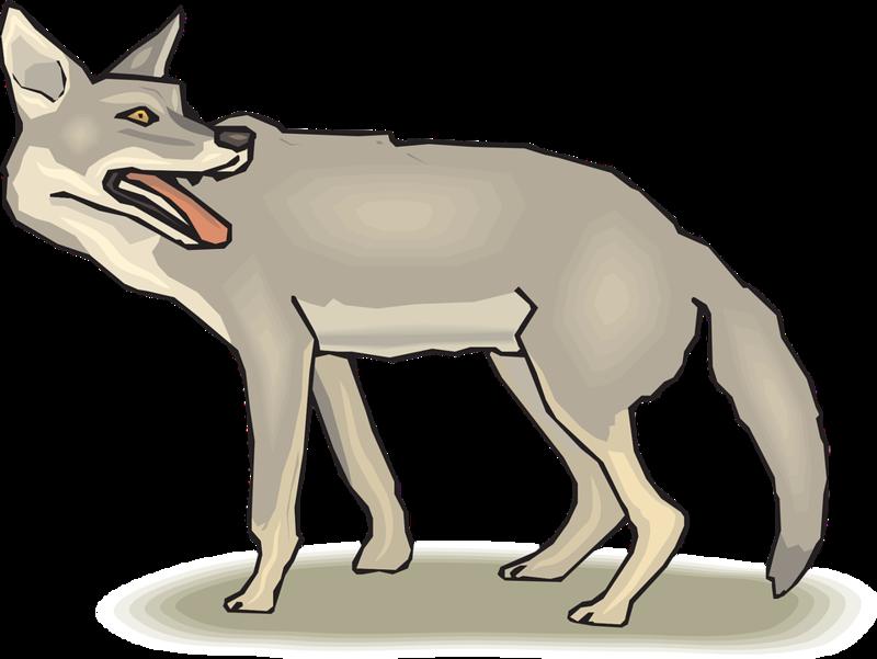 Coyote clipart transparent. Download free png jackal
