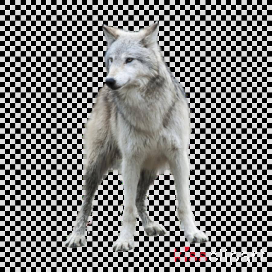 Coyote clipart transparent. Wildlife wolf fur arctic