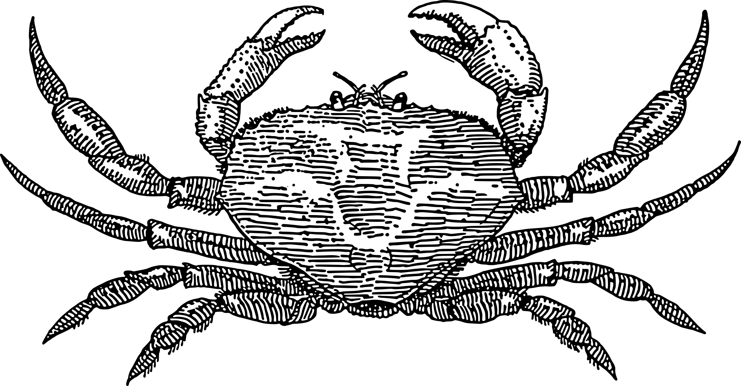 Crab clipart arthropoda. Black and white bclipart