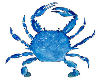 Crab clipart blue crab. Image of logo images