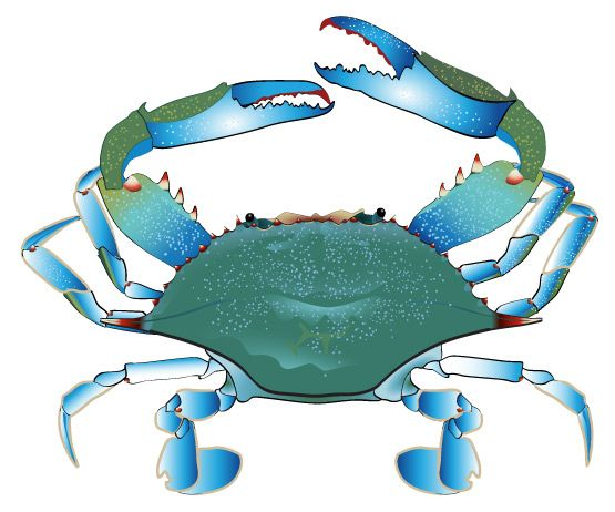 Crab clipart blue crab. Free scamp ideas clip