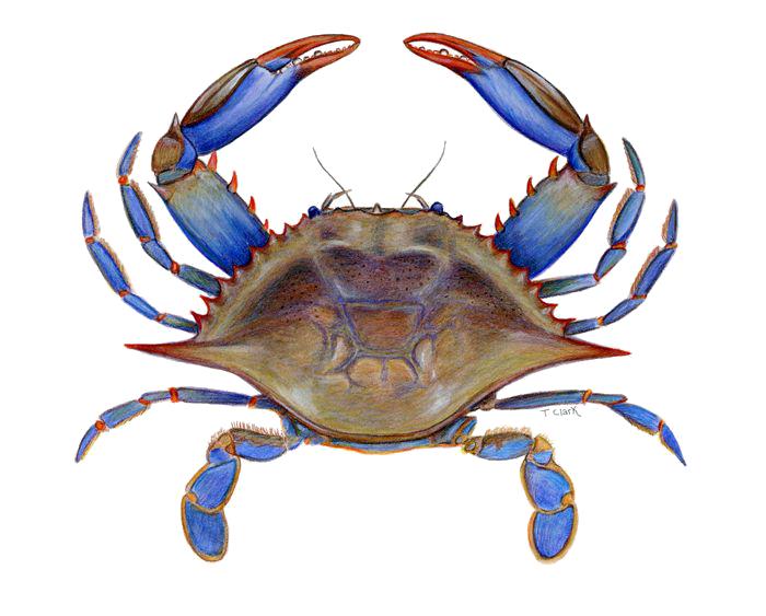crab clipart border