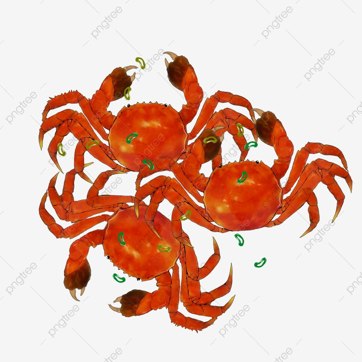 Hand painted steamed boiled. Crab clipart crab boil